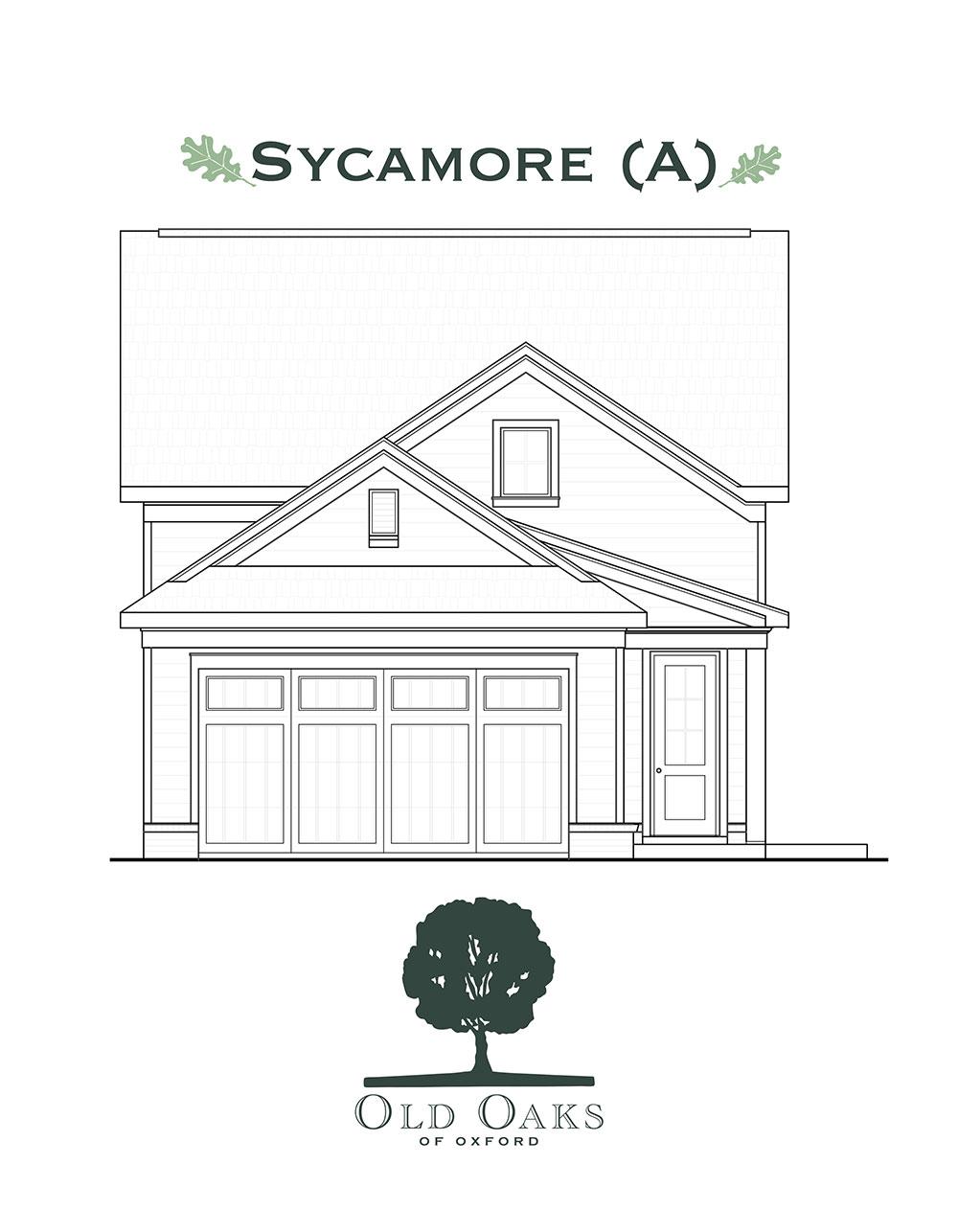 Sycamore (A)